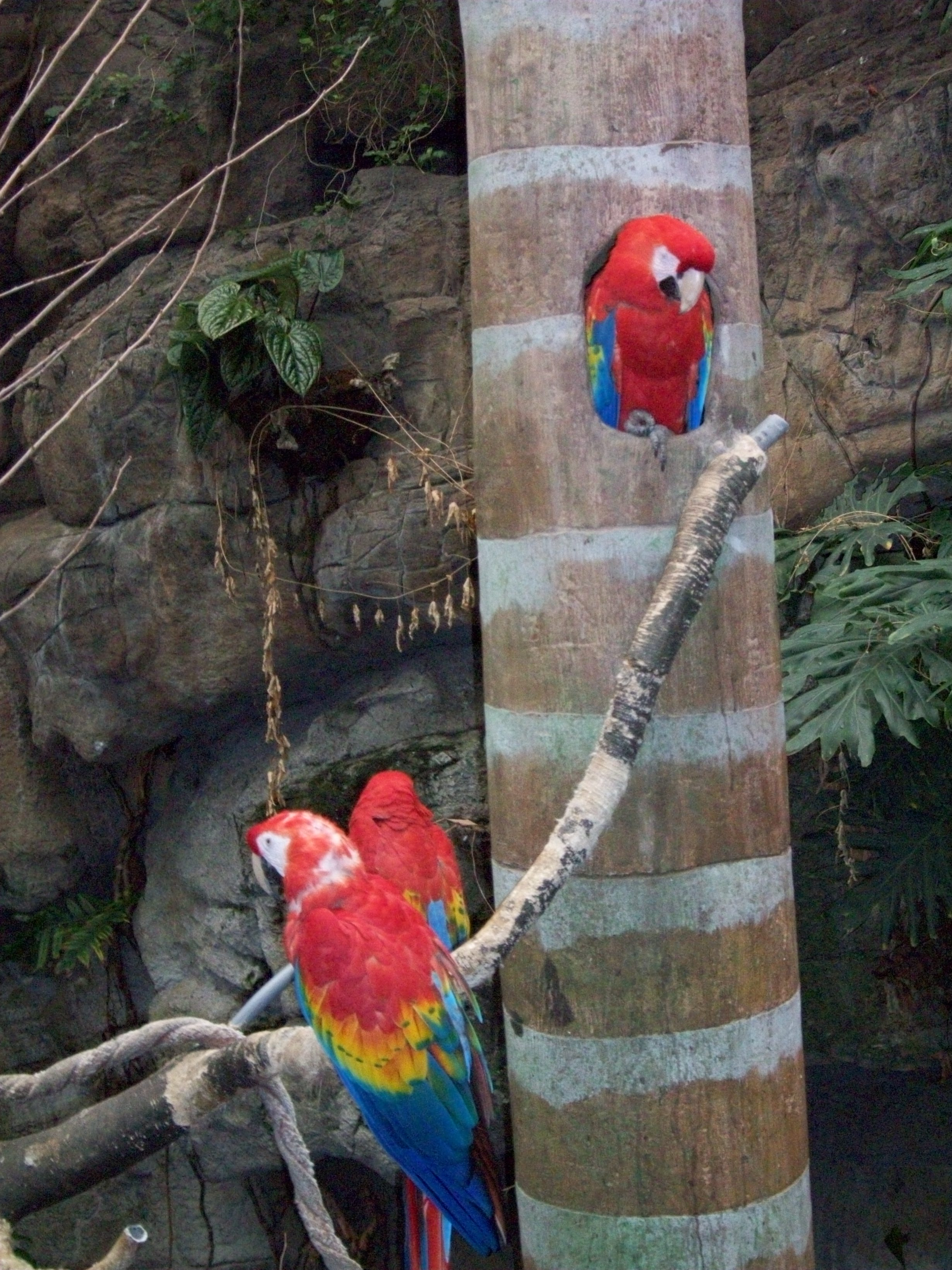 rainforest zoo research paper Breaking news: research suggests that zoos do not 'educate or  published  paper in the academic journal, conservation biology, the idea.