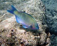49.jpg - tropical fish