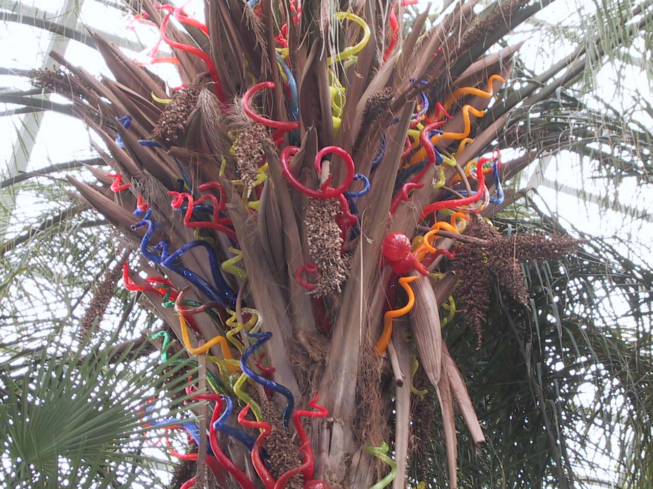 From The Chihuly In The Park A Garden Of Glass At Garfield Park Chicago Pics4learning