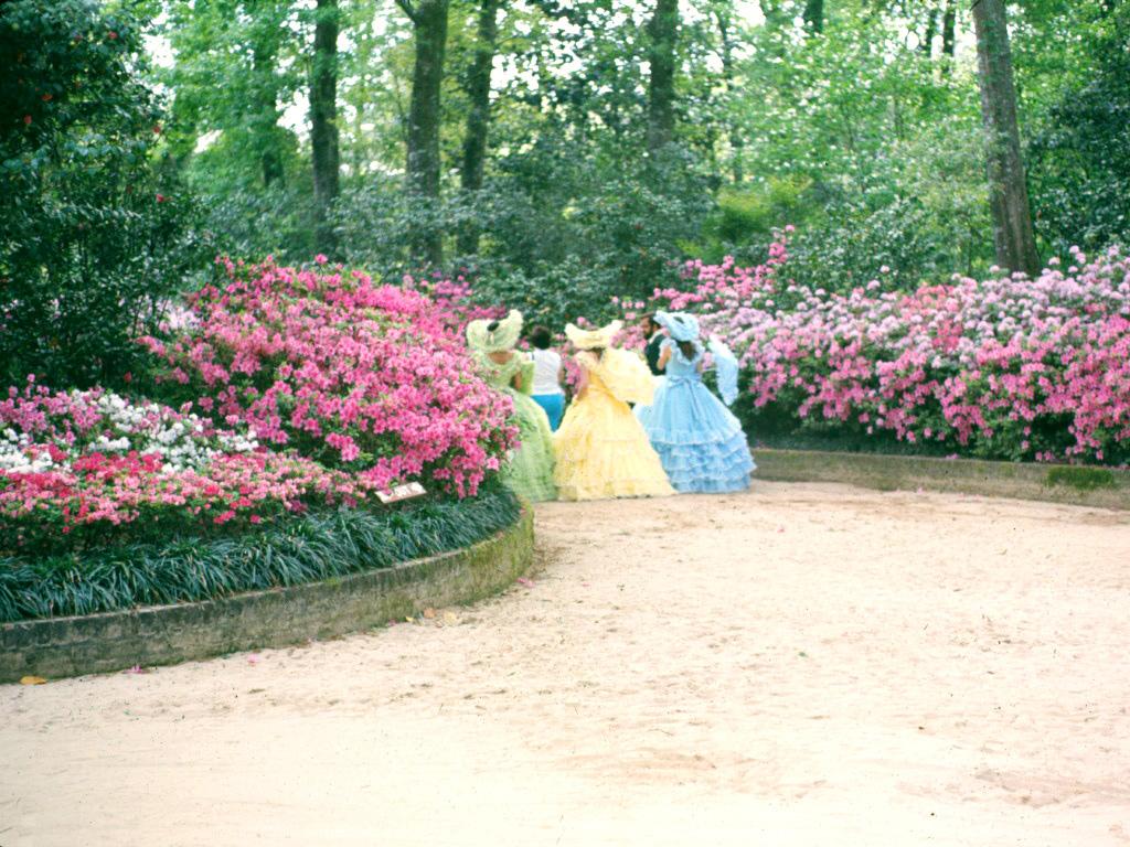 belles2.jpg - Southern Belles