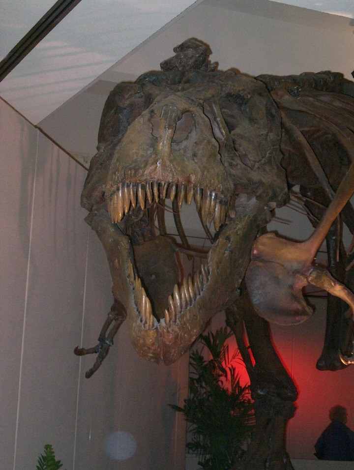 dinosue2.jpg - Sue, the T-Rex, traveling exhibit