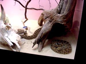 greatshot.reptiles.jpg - A Family of Snakes