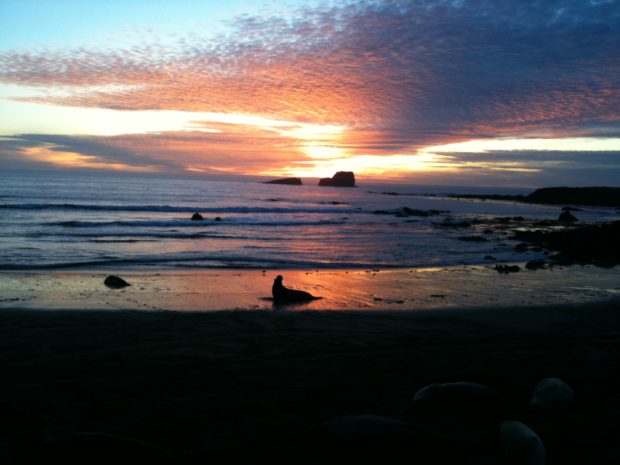 img_02361.jpg - Elephant Seal Sunset