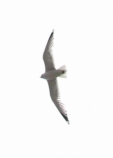 mcphersonfamily5397.jpg - Bird