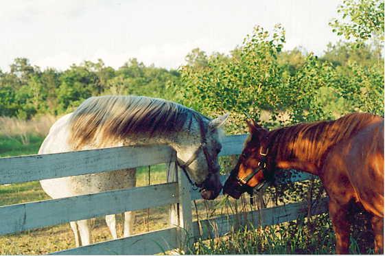 my_horses.jpg - Making Friends