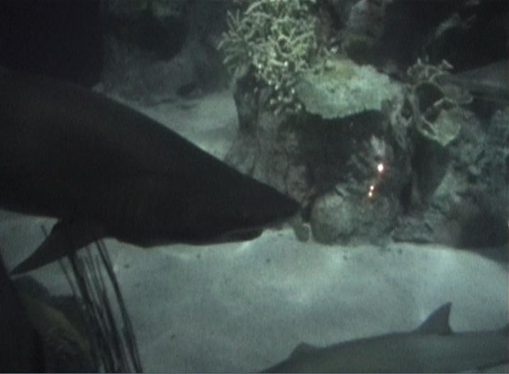 shark.png - Sharks