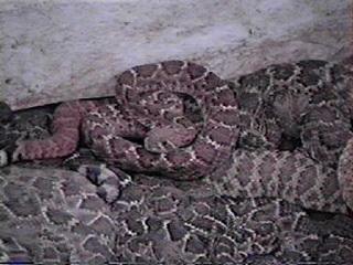 snake1.jpg -