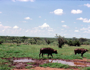 tanza027.jpg - Animals on the plains of Tanzania