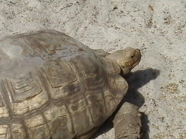 tortoise12345.jpg - Tortoise