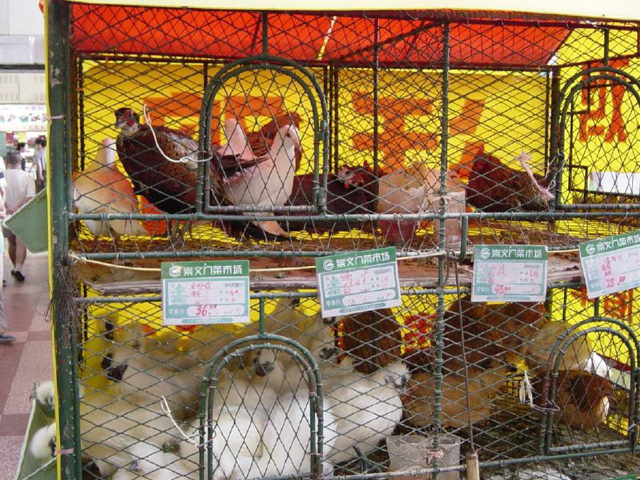 Live chickens and other birds for sale at supermarket
