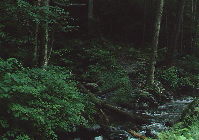habit007.jpg - Forest
